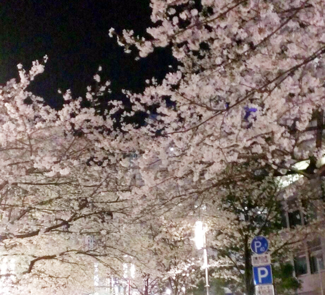 sakura_140329-1